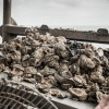 Oyster Opulence in Galveston and the Bay Area