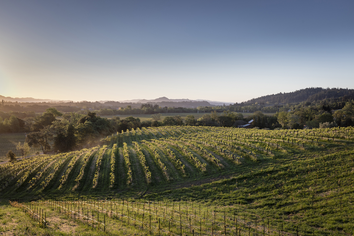 Quivira Vineyards. Photo courtesy